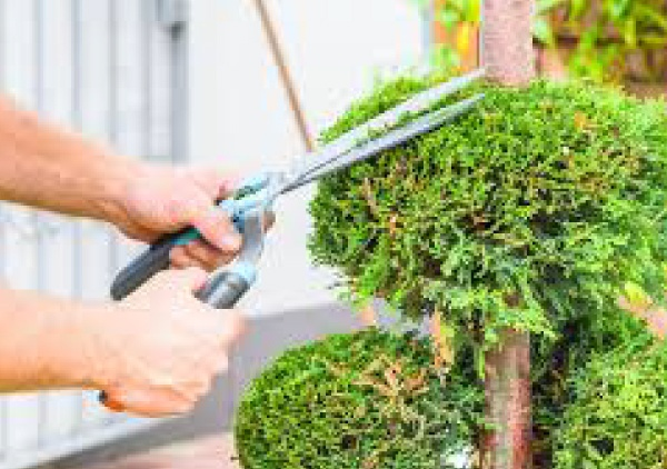 arborist services in canberra