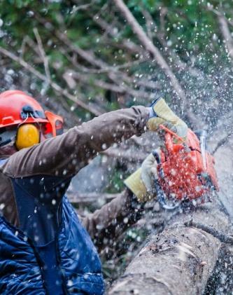 tree removal company canberra