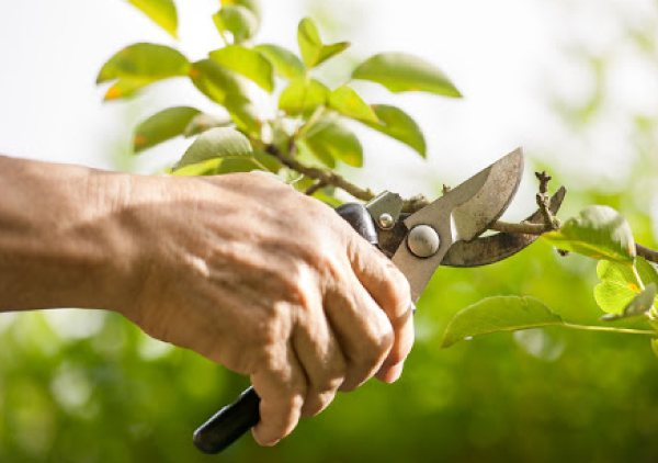 tree pruning canberra