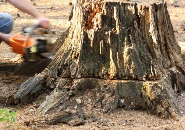 stump grinding canberra