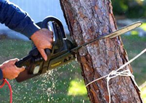 tree removal service canberra